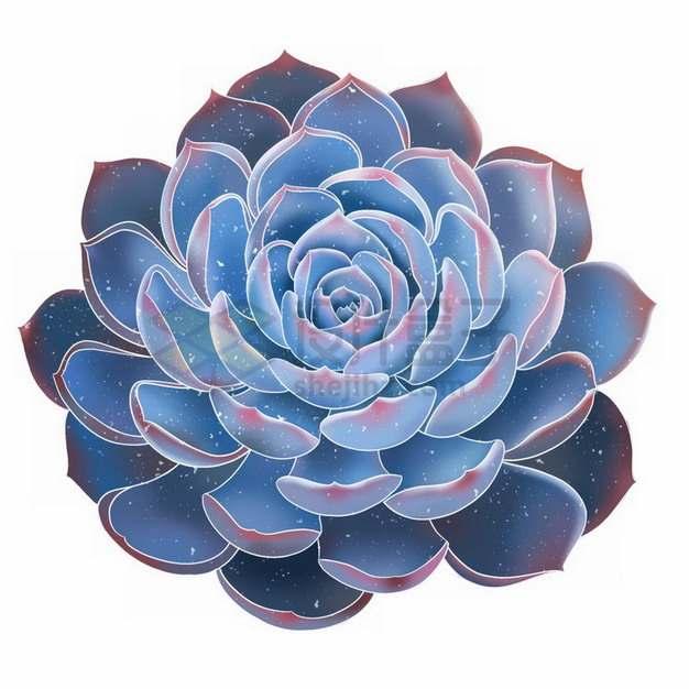 蓝石莲美丽的多肉植物764389png免抠图片素材