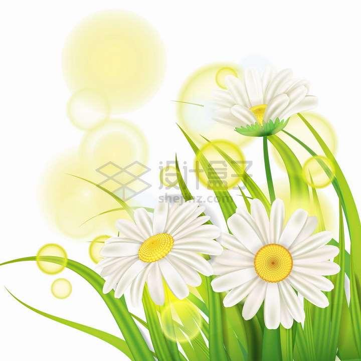 绿油油的青草和雏菊白色花朵黄色的光圈png图片免抠eps矢量素材