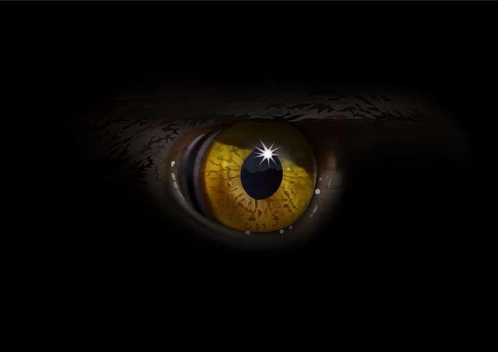 黑暗中一双邪恶的大眼睛png图片免抠矢量素材