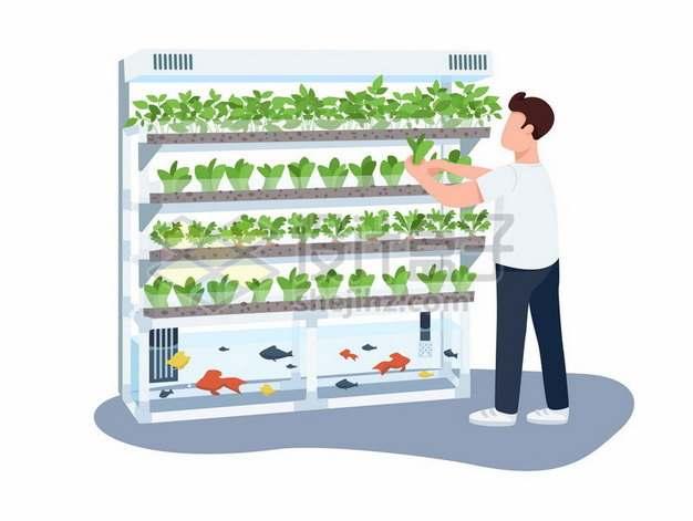 立体无土栽培技术农业新技术373803 png图片素材
