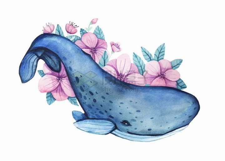 水彩画鲸鱼和花朵艺术插画png图片免抠矢量素材