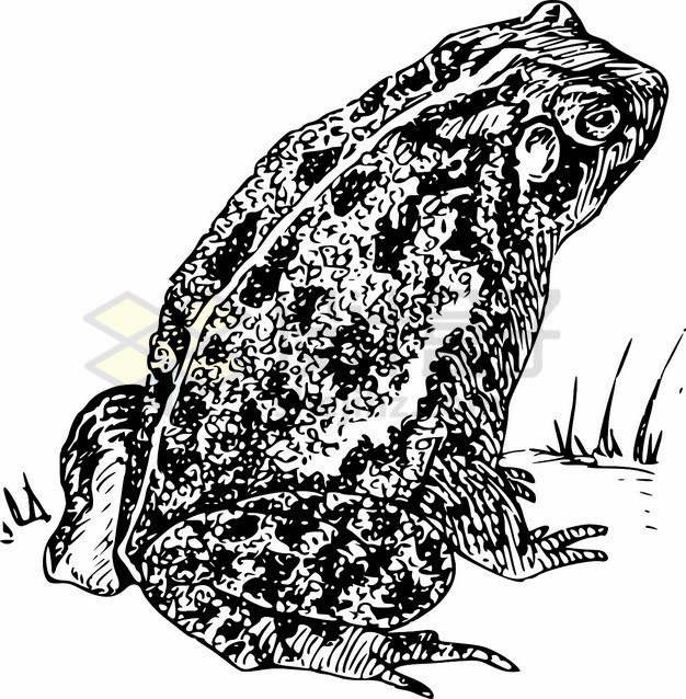 黑色手绘癞蛤蟆蟾蜍两栖动物png图片素材
