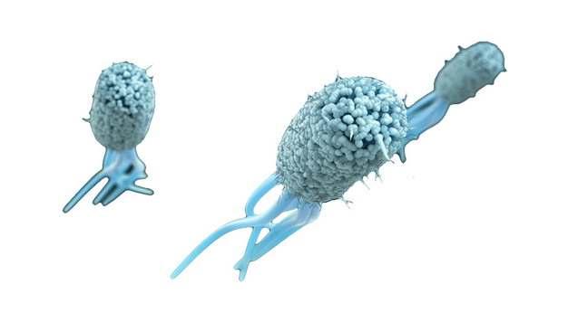 显微镜下蓝色的大肠杆菌带鞭毛633614png图片素材