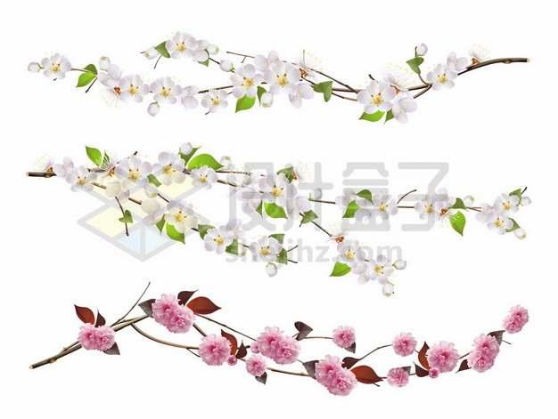 枝头上的粉色和白色桃花377781png图片素材