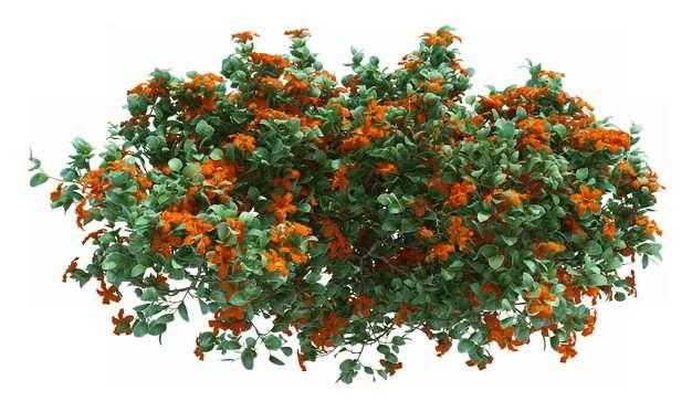 一丛盛开的花朵636887 png图片素材