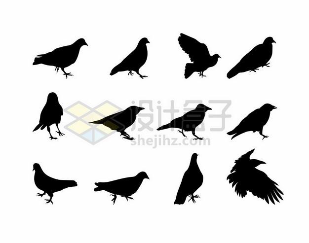 12款鸽子乌鸦等鸟儿剪影310070png矢量图片素材 生物自然-第1张