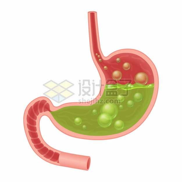 充满胃酸的人体胃部解剖图212597png图片素材