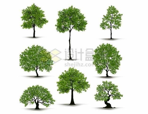 8款不同造型的绿色大树662110png矢量图片素材