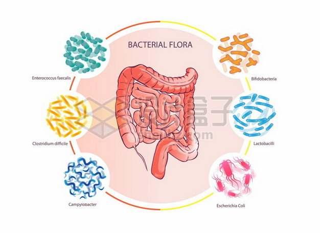 肠道细菌大肠杆菌等133921png图片素材