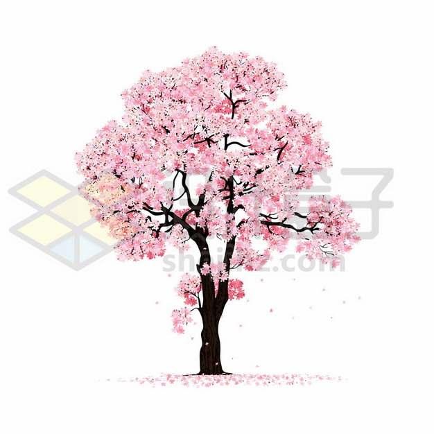 开满粉色桃花的桃树满地的花瓣542624png图片素材