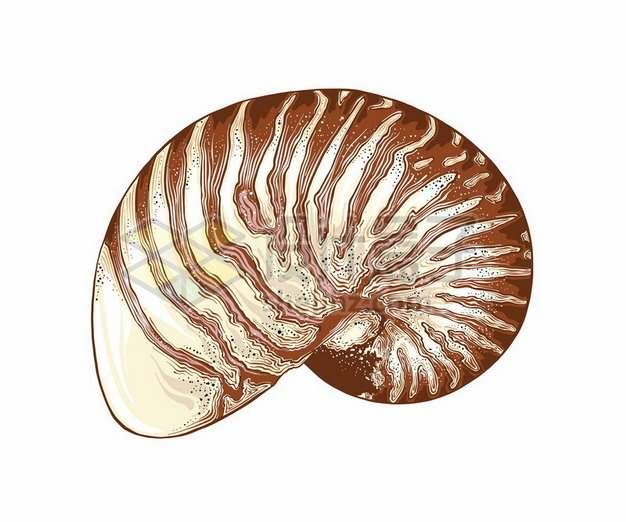 鹦鹉螺贝壳海洋动物152300png图片素材