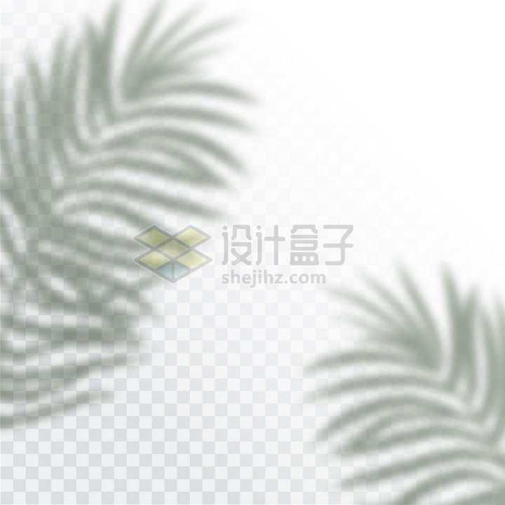 热带树木棕榈树的影子png图片免抠矢量素材