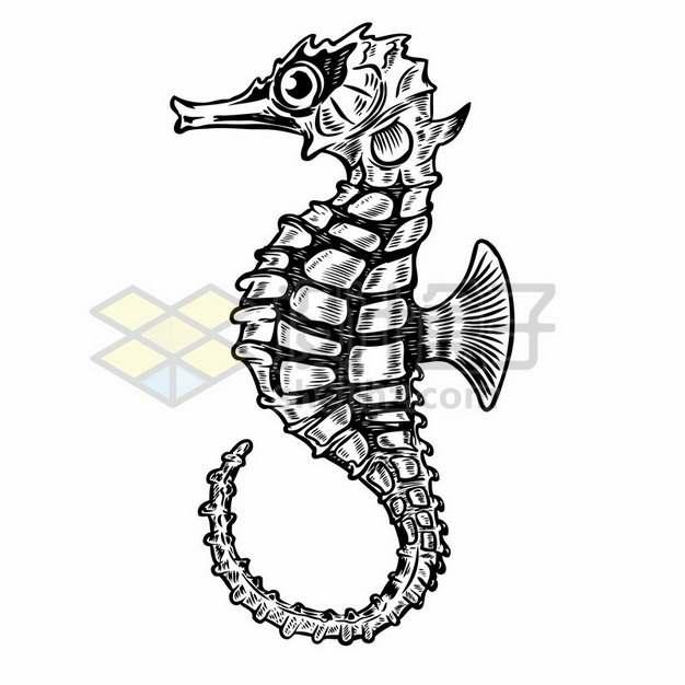 海马黑白插画863911png图片素材