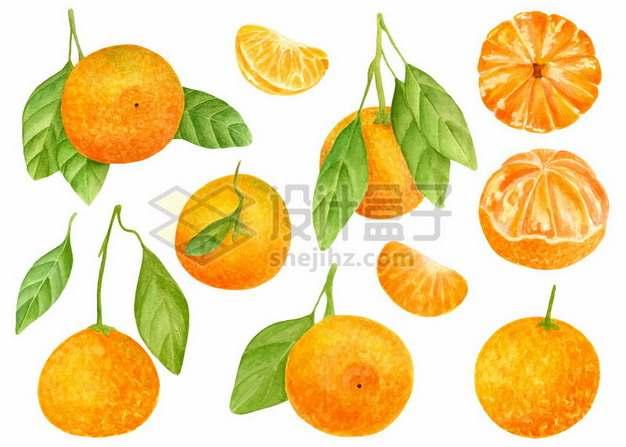 橘子和剥开的橘子水彩插画683799png图片素材