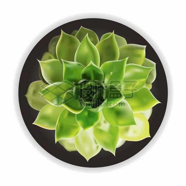 莲花掌多肉植物俯视视角580517png图片素材
