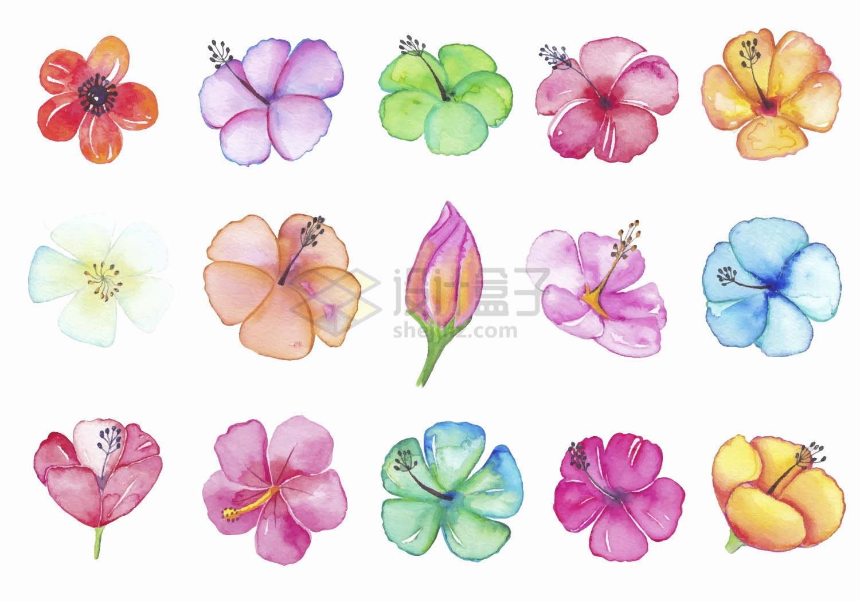 各种颜色的樱花桃花等水彩画鲜花花卉png图片免抠矢量素材