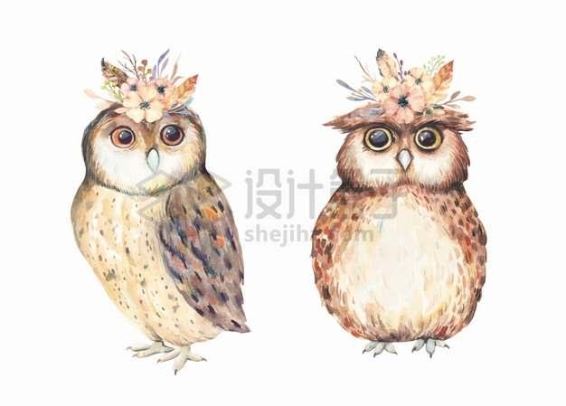 头上顶着鲜花的猫头鹰水彩插画png图片素材