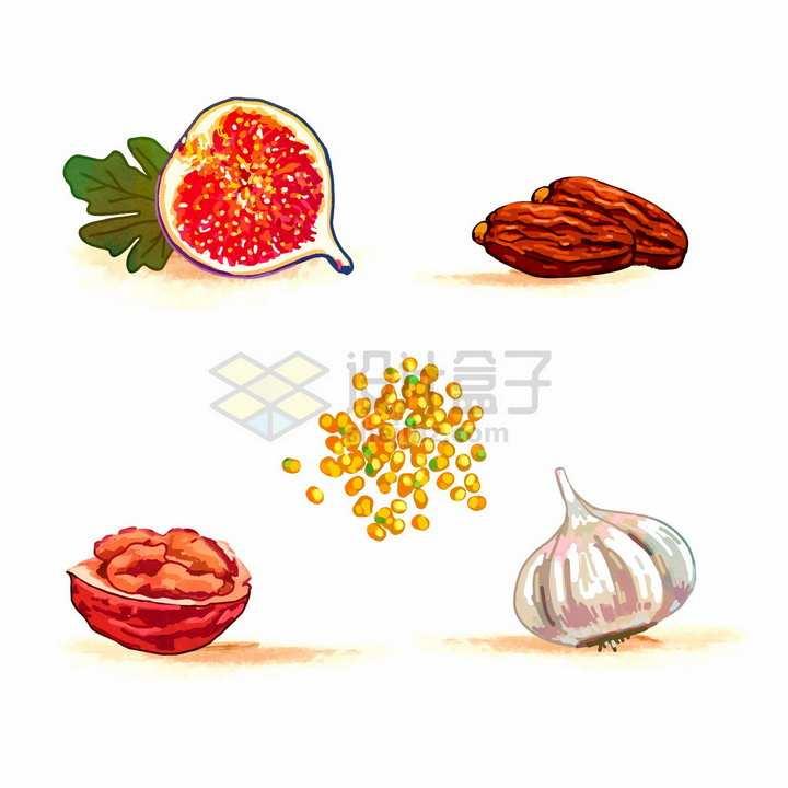 无花果红枣核桃大蒜头等美味美食彩绘插画png图片免抠矢量素材
