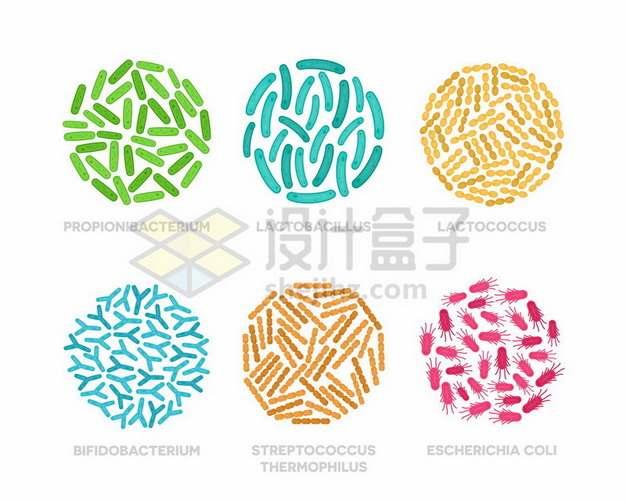 显微镜下的丙酸杆菌乳酸菌乳球菌双歧杆菌嗜热链球菌大肠杆菌png图片素材
