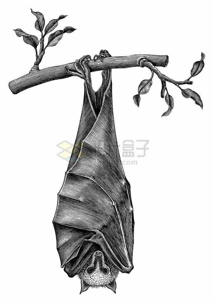 倒挂在树枝上的蝙蝠手绘素描插画png图片免抠矢量素材