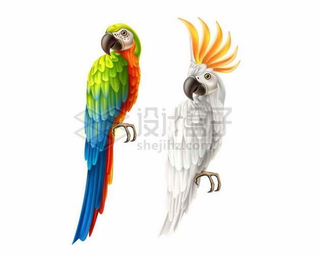逼真的金刚鹦鹉和白色的葵花凤头鹦鹉png图片素材