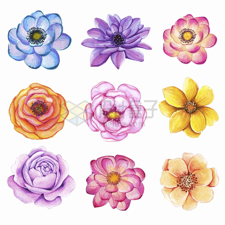 9款牡丹花月季花山茶花等水彩画紫色红色黄色花朵鲜花png图片免抠矢量素材