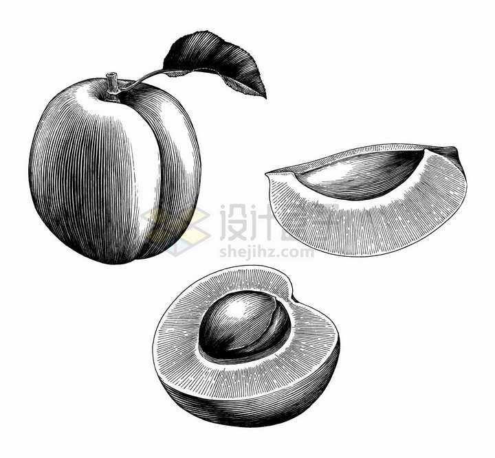 桃子和切开的水果手绘素描插画png图片免抠矢量素材