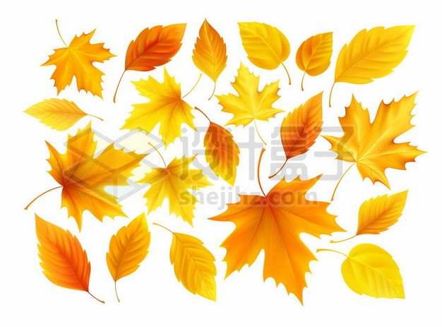 枫叶等黄色树叶秋天的叶子980472png图片素材