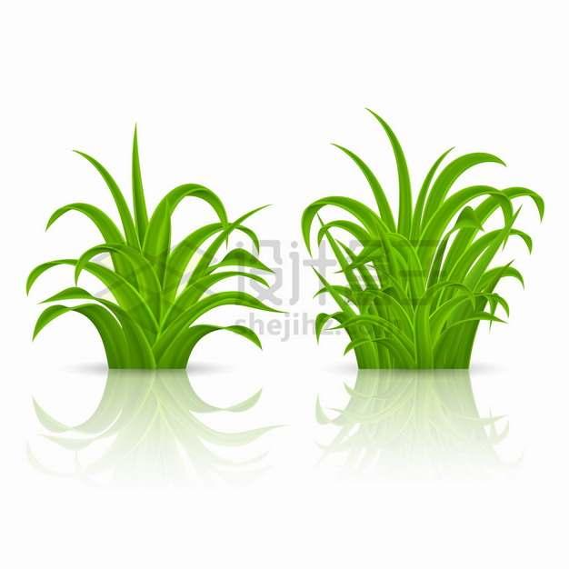 两个翠绿色的草丛嫩草地草坪png图片素材
