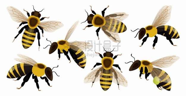 7款不同角度的蜜蜂png图片素材