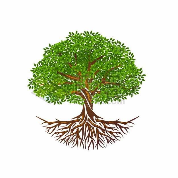 带树根的绿色参天大树950474png矢量图片素材