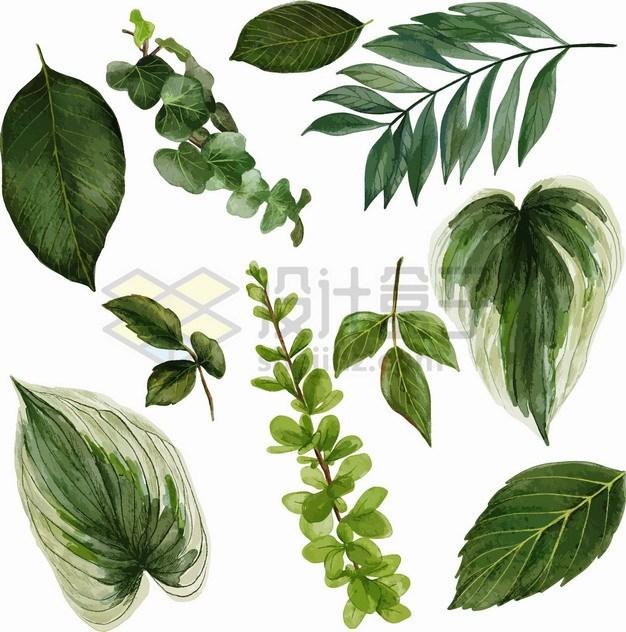 各种深绿色的树叶绿色叶子png图片素材 生物自然-第1张