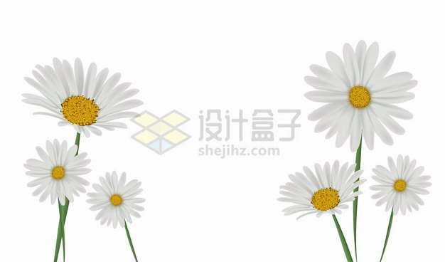 春天里的白色雏菊花朵鲜花花卉png图片素材