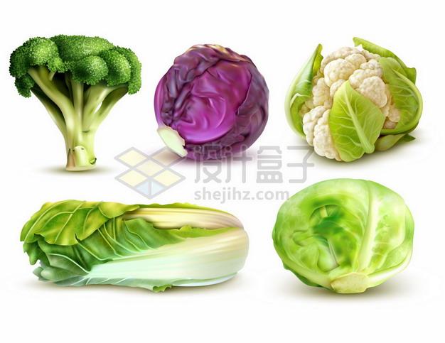 西兰花紫甘蓝花菜大白菜包菜等美味蔬菜212823png矢量图片素材 生活素材-第1张
