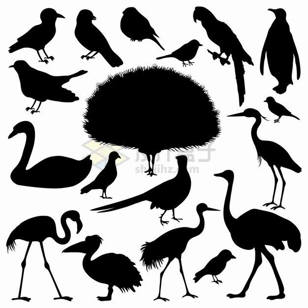麻雀喜鹊鹦鹉孔雀鸵鸟天鹅乌鸦企鹅仙鹤火烈鸟等鸟类剪影png图片素材 生物自然-第1张
