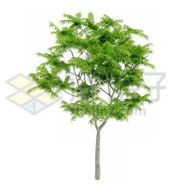 观赏植物绿植283414psd/png图片素材