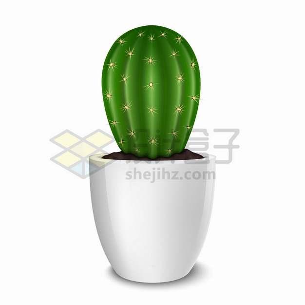 白色陶瓷花盆中的仙人掌仙人球盆栽绿植0234657png图片素材