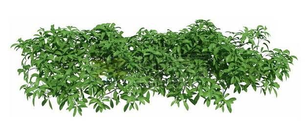 茂盛的灌木丛346698psd/png图片素材