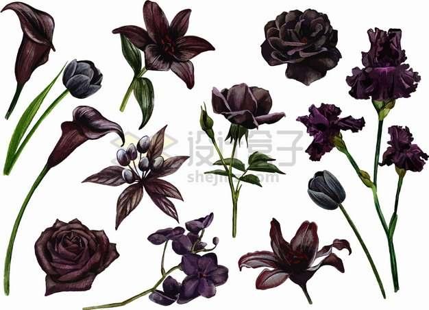 黑百合花黑玫瑰黑郁金香等黑色花朵鲜花png图片素材