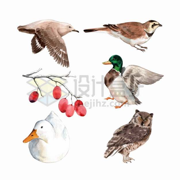 海鸥鸭子猫头鹰等水彩画动物鸟类png图片素材