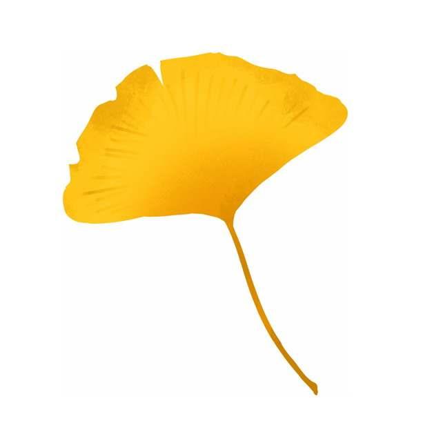 秋天金黄色的银杏树叶417998png图片素材