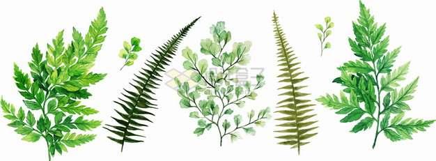 各种蕨类植物铁线蕨绿色叶子png图片素材