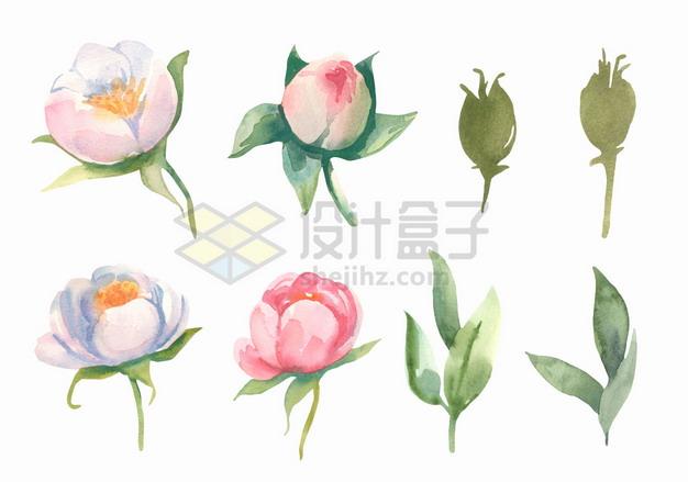 粉红色白色茉莉花鲜花花朵花卉和叶子水彩插画png图片素材 生物自然-第1张
