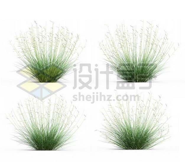 4款杂草野草高羊茅草地草坪草丛草场663842psd/png图片素材