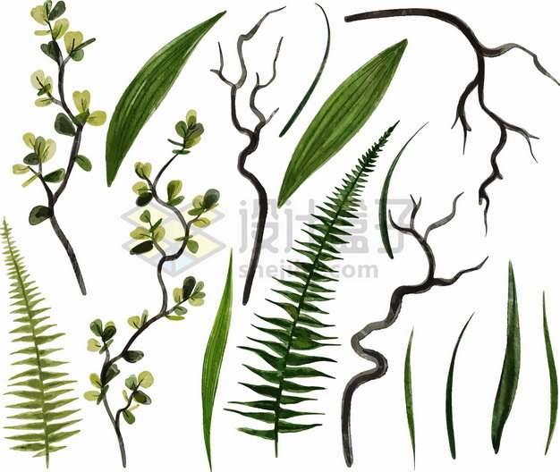 蕨类植物竹子的叶子和枯枝png图片素材