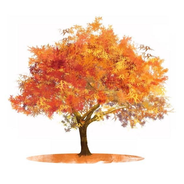 秋天红色金色的大树枫树水彩插画651775png图片素材 生物自然-第1张