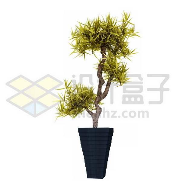 花盆里的马尾铁盆栽100864psd/png图片素材