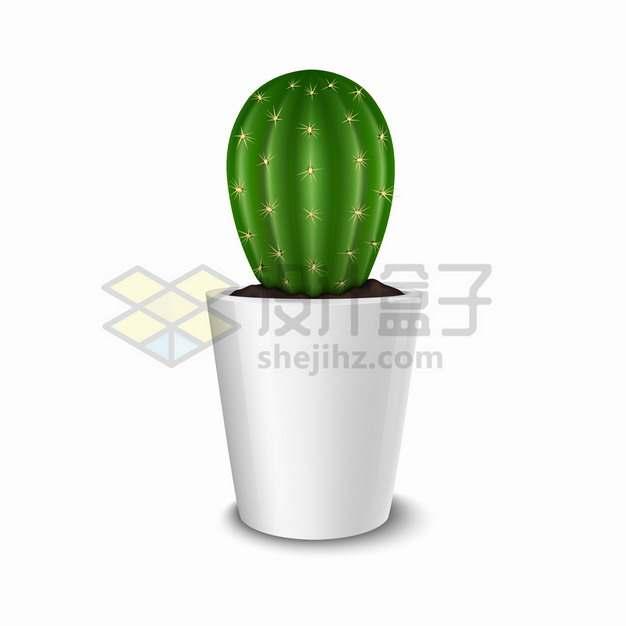 白色陶瓷花盆中的仙人掌仙人球盆栽绿植791245png图片素材