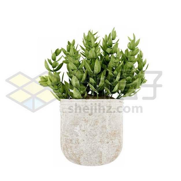 花盆里的观赏绿植盆栽797410psd/png图片素材