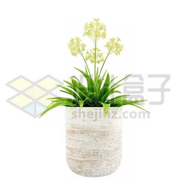 花盆里的万年青盆栽735867psd/png图片素材
